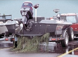 Hydrilla on a boat trailer